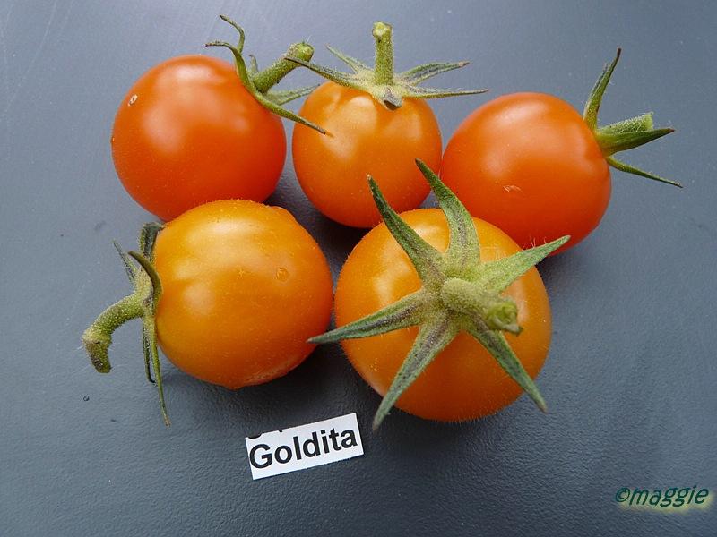 tomaten atlas detailansicht goldita. Black Bedroom Furniture Sets. Home Design Ideas