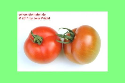 tomate hellfrucht hilmar