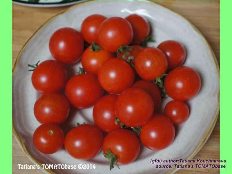 tomaten atlas detailansicht red robin. Black Bedroom Furniture Sets. Home Design Ideas